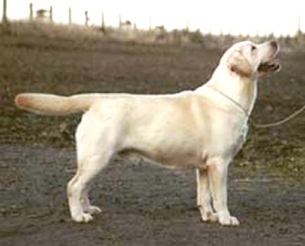Sire:- SH CH FULLWELL FREEBOOTER AT HALSHIMOOR Dam:- FREWLINGS FANCY FREE Breeder:- MRS M McCULOCH Owner:- MRS M McCULLOCH & MRS M BROWN