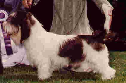 Sire: Am Ch Elan Cartouche de Qubic Dam: Am Ch Jamars Kindred Spirit Breeder: Valerie Link