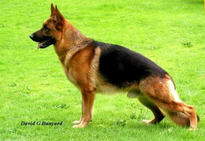 Sire :- 