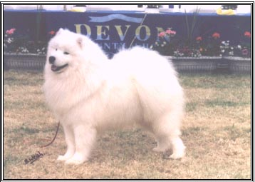 Roybridge Lucky's Legacy F. - Ch Zamoyski Lucky Casanova at Roybridge M. - Astutus Abracadabra at Roybridge Owner & Breeder- Mrs Bridget Enticott & Miss Donna Fleming  See Breeders list 'ROYBRIDGE'
