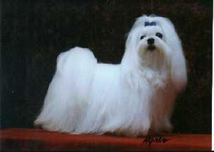 Champion Restinim Rupert Bear