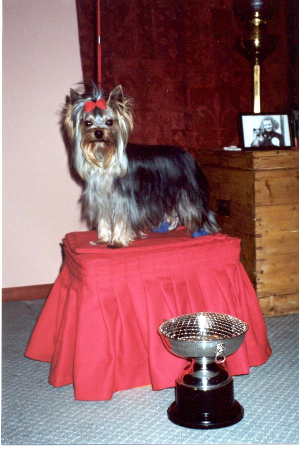 Sire:=Ch Yorlang Sweet William
