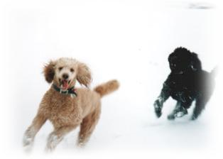 Jenny and Leo in the Snow