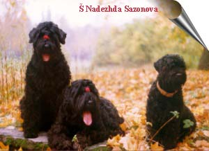 These dogs belong to Nadez Sazonova 