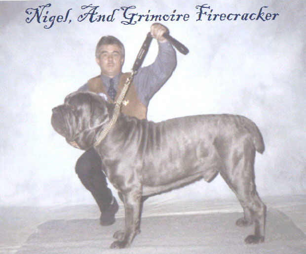 Grimoire Firecracker Sire:- Int Ch Don Corleone v Bennato Dam:- Nessie os the Thatched Roof at Grimoire Breeder:- M & J Howell Edwards Owner:- Mr Mrs N & J Walker & Brooks.