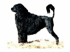 Popparin Pouco Frito